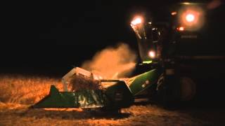 When the night falls - Bean Harvesting