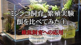 【ミジンコ飼育(増やし方)】 繁殖実験 餌を比べてみた① -稚魚飼育への応用-