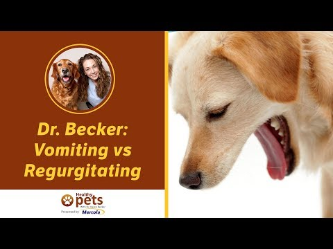 Dr. Becker: Vomiting Vs Regurgitating