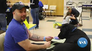 Precious Companionship: How Assistance Dogs Change Lives