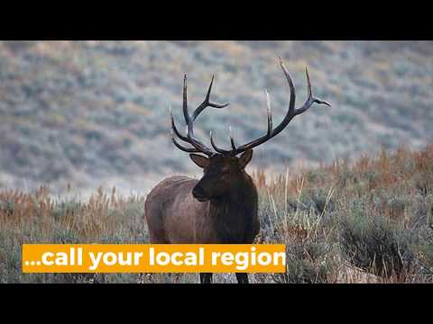 Be Sure You Have Your Hunting Permit