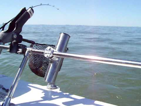 Lake Erie Walleye Fishing Charter Trips Monroe, MI