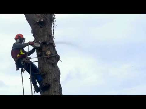 Powell River Tree Removal