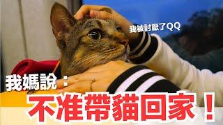 好味小姐-我媽說帶貓就不要回去-可是現在-好味貓日常-ep63
