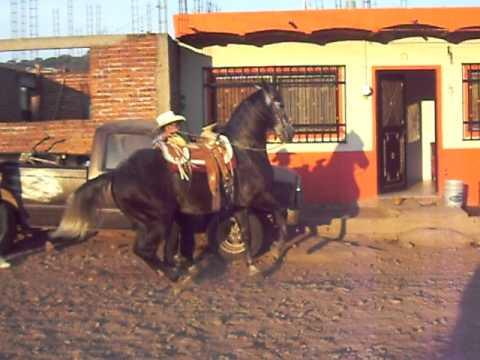 Aztec Horse Dancing
