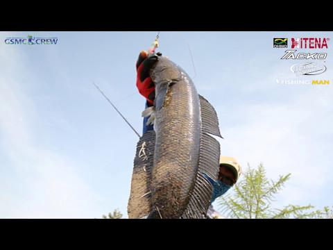 GSMC SNAKEHEAD FISHING with CREW 20170501가물치낚시