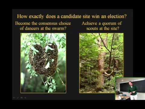 Swarm Intelligence in Honey Bees