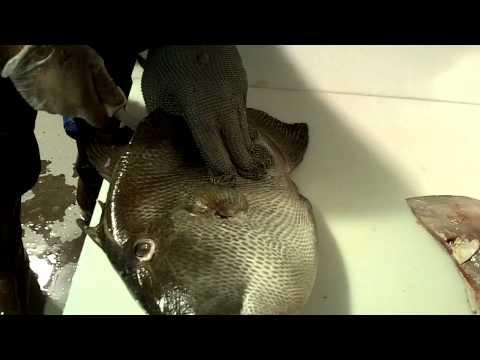 Seafood 101 Triggerfish