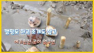 [해루질, 캠핑] ]몽산포 자동차야영장 캠핑, 맛조개 …