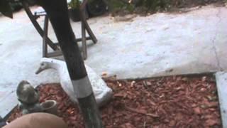 como eliminar hormigas y pulgones de los arboles