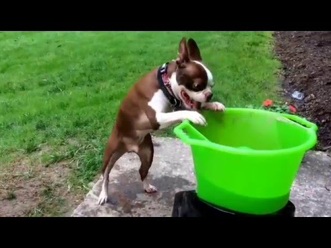 Titan loves his GoDogGo Fetch Machine!