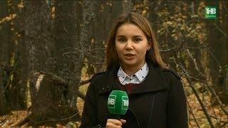 Новости Татарстан 19/10/18 ТНВ