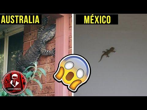 TOP 7 MOTIVOS PARA NO VISITAR AUSTRALIA