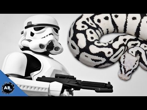 Insane Star Wars Snake! EP.425 : SnakeBytesTV : AnimalBytesTV