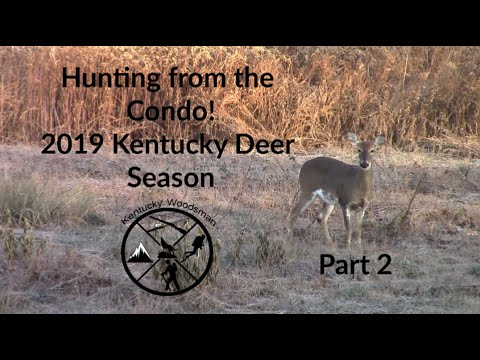 Hunting From A Condo! 2019 Kentucky Deer Season Part 2