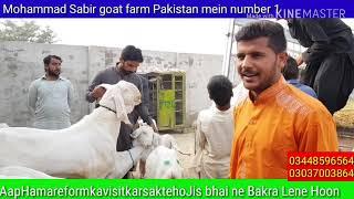Mohammad Sabir goat faram Pakistan mein number one Khubsurat Bakre Bakre aapko Mil Jayenge