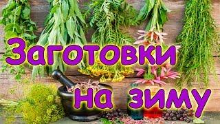 Заготовки 2017 - наша 20 кубовая сушилка для трав, морозим, сушим. (08.17г.) Семья Бровченко.