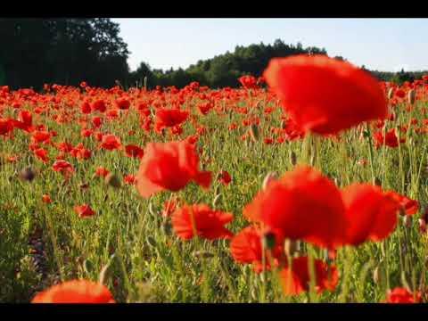 The Green Fields Of France By The Dropkick Murphys