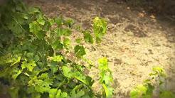 Washington Wines and the Walla Walla Valley