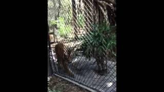 Video JJ's trip to the zoo part 4 download MP3, 3GP, MP4, WEBM, AVI, FLV Juni 2018