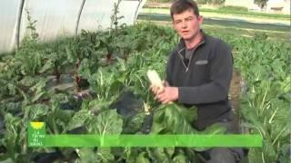AMAP circuit court Nantes agriculture biologique à la ferme du soleil