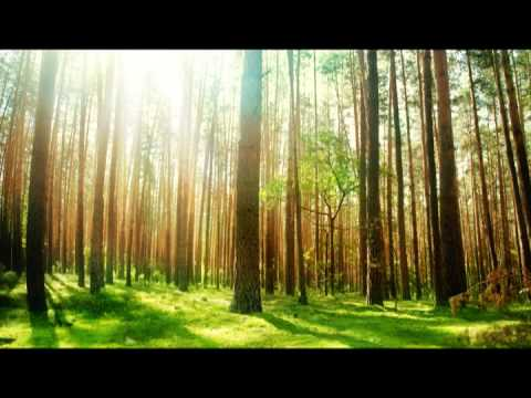 1 Hour Non Stop Music For Sleeping Baby Rainforest