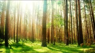 1 Hour Non Stop Music for Sleeping Baby: Rainforest Lullabies with Nature Sounds