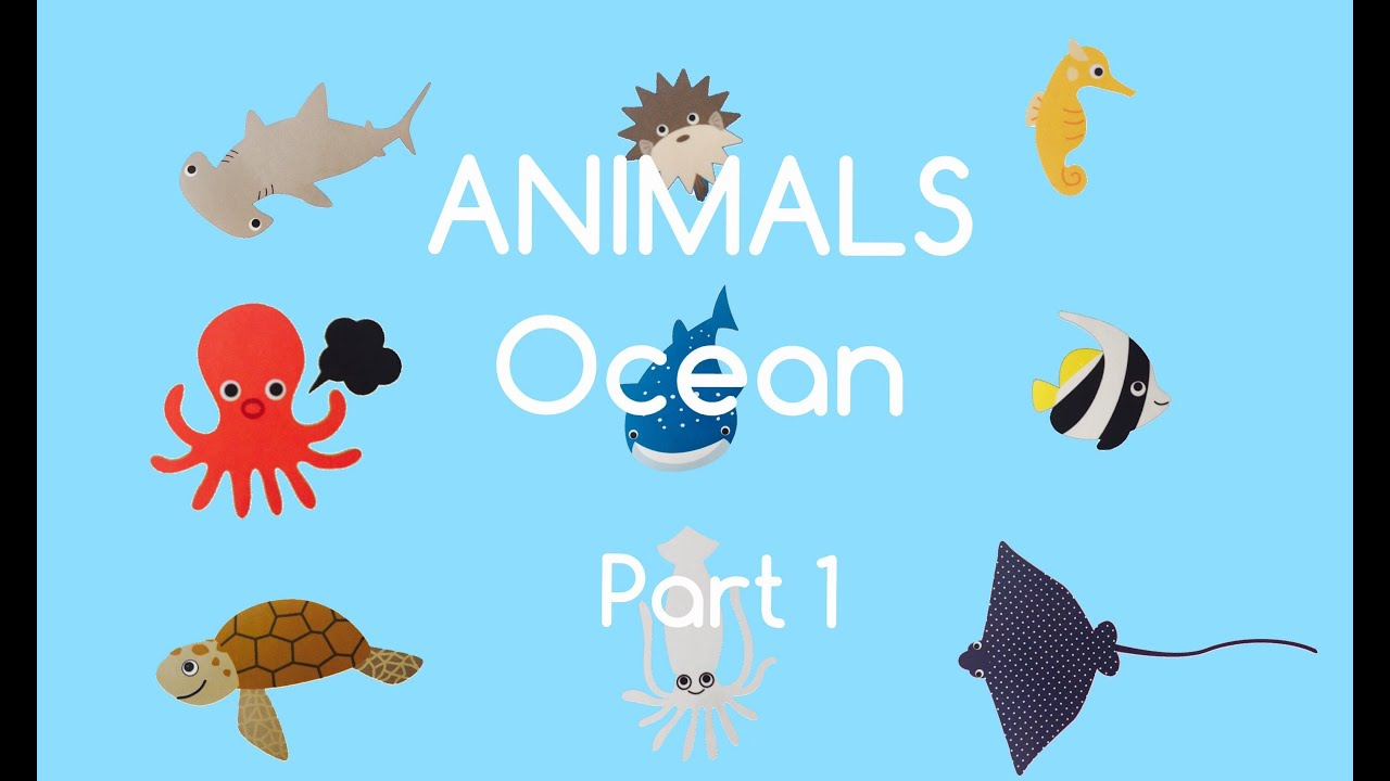 Water animals pictures for kids