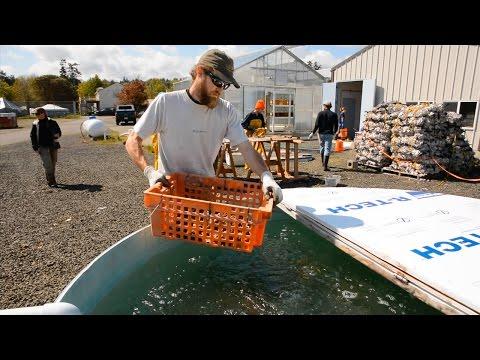 Restoring Native Shellfish: The Kenneth K. Chew Shellfish Hatchery