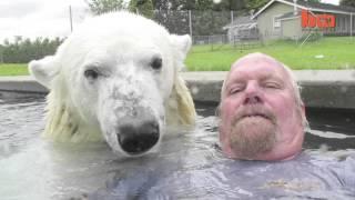 Ручной белый медведь прикол.(Прикол про ручного белого медведя смотреть онлайн приколы., 2013-12-20T13:36:02.000Z)