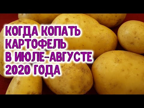 Когда копать картофель в июле-августе 2020 года? Агрогороскоп на август 2020 года