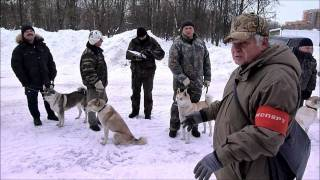 15-я Московская зимняя выставка лаек 2011