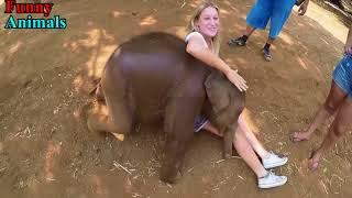 Funny and Cute Baby Elephant    Lap Elephants Videos Compilation 2017   Girl vs elephants