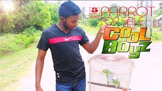 Parrot For Sale  CoolBoyzTV  :::Caribbean Funny Video:::