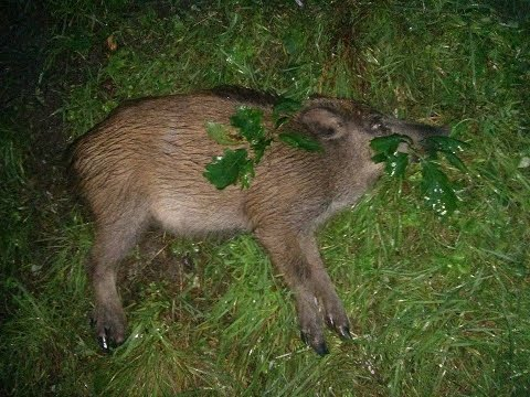 Lov diviaka (Wild Boar Hunt)