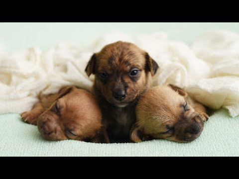Doggie Foster Mom Captures 2-Week-Old Shelter Pups In Adorable Photo Shoot