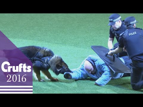 West Midlands Police Dog Display | Crufts 2016