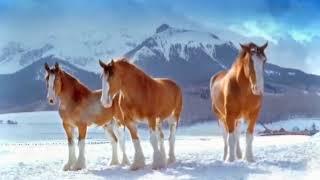 Konie i snieg