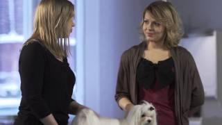 Miten hoidetaan koiran pitkää turkkia?