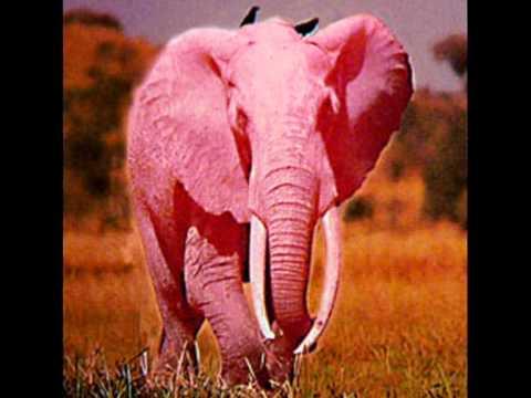 Песня розовый слон скачать минусовку бесплатно