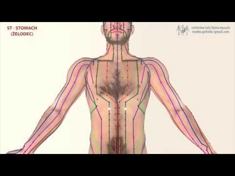 ST - Stomach Meridian