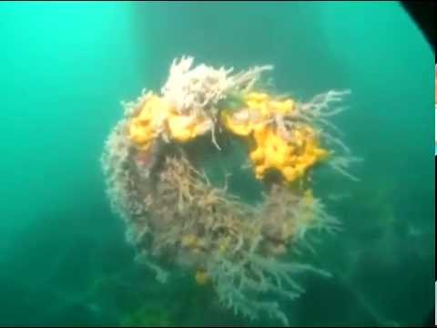USS Perch (SS-176) Underwater Footage