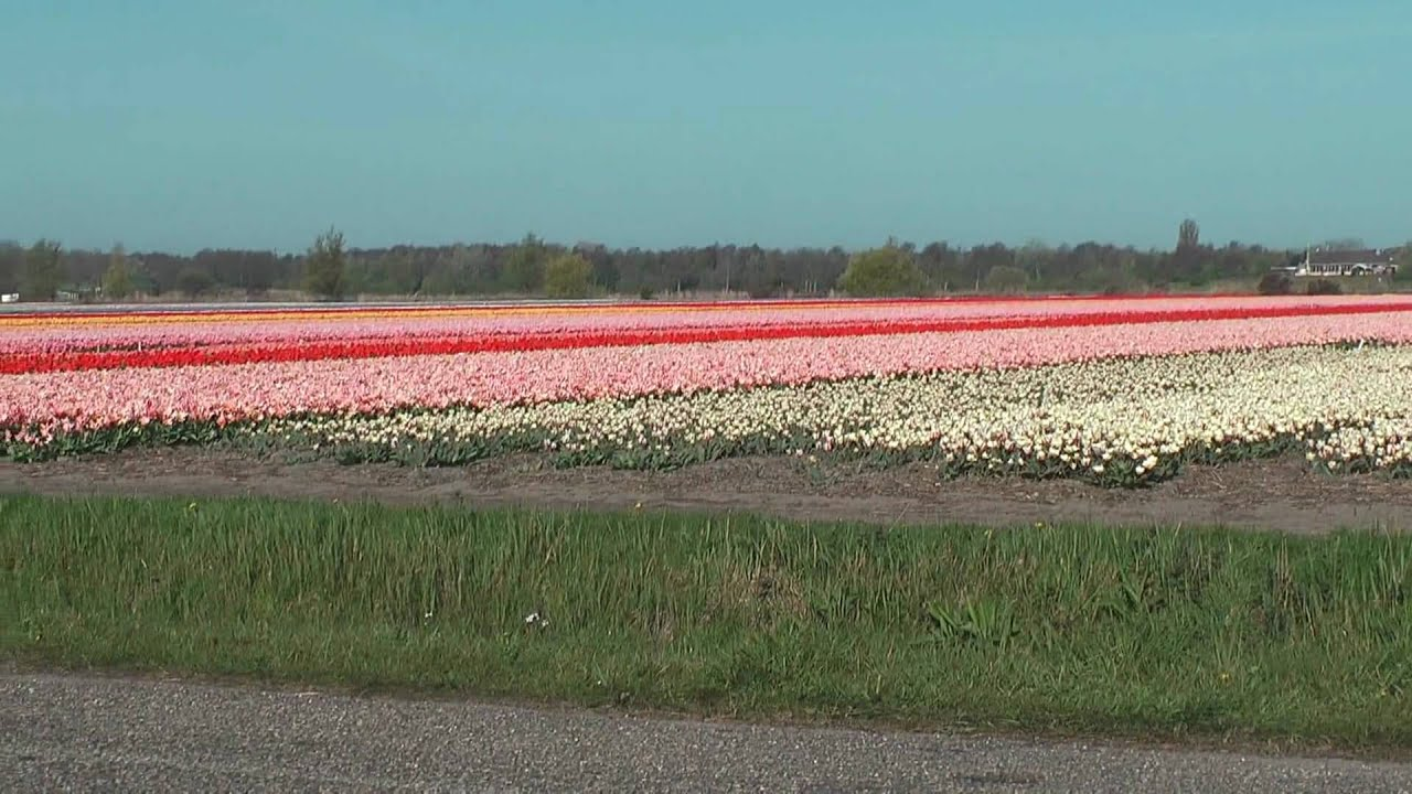 Bloemenvelden in HD 1080p