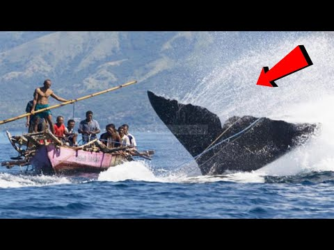 RAKSASA...!!! 8 Video Penyerangan MONSTER Besar Di Laut Terhadap Kapal