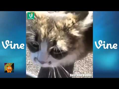 Best Funny and Cute CAT VINES Compilation 2014 HD ★ 30 MINUTES