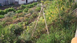 [Permaterre] Potager en permaculture [7] Septembre 2014