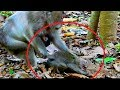 BREAK HEART | Monkey FIGHTING Baby Very Hard | Baby Shout Loudly | Pity On baby , Baby hurt