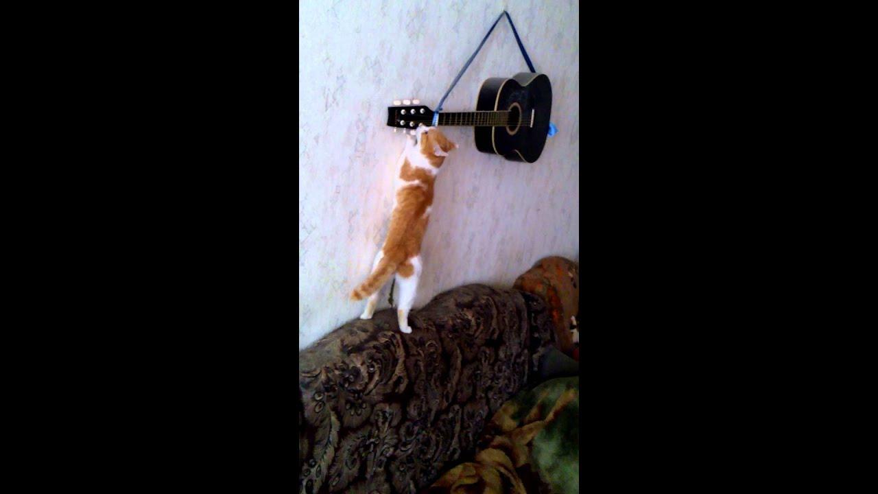 Гитаристы коты картинки
