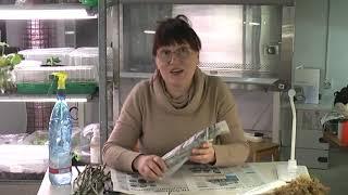 Как размножать растения методом буррито