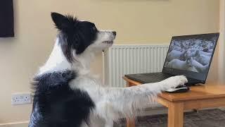 Rory the Border Collie  Alphabet challenge  funny dog tricks compilation
